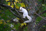 Rare Albino squirrel spotted in park