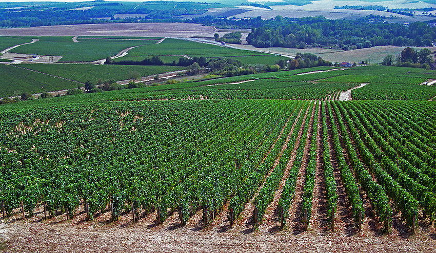 The view from the top of the Chablis grand cru hill - South, over Les Clos Grand Cru