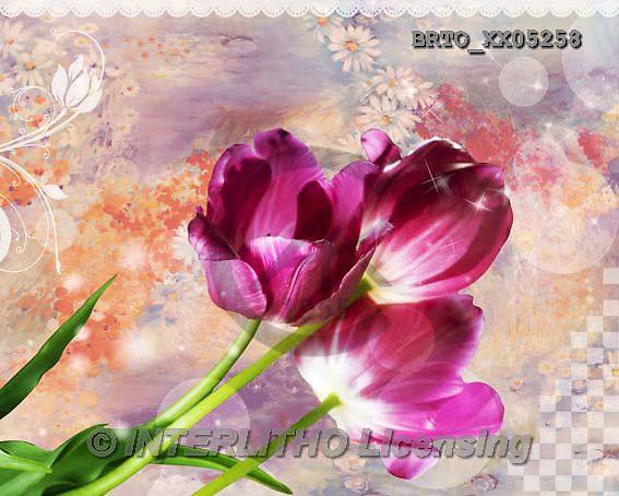 Alfredo, FLOWERS, BLUMEN, FLORES,  photos+++++,BRTOXX05258,#F#
