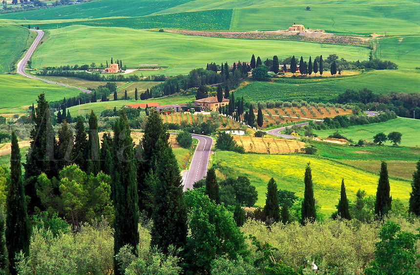 Italy, Pienza, Tuscany. view of the Tuscan landscape with cypress trees and farms