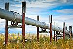Pipeline in fall colors, Dalton Hwy, Arctic Alaska, Autumn.