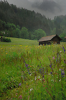 Cattle shelter on cloudy spring meadow,Imst district, Tyrol/Tirol, Austria, Alps.