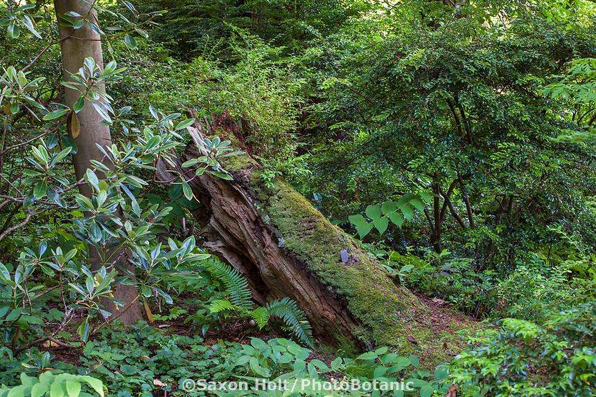 Log rotting in woodland at Elisabeth Miller Botanical Garden