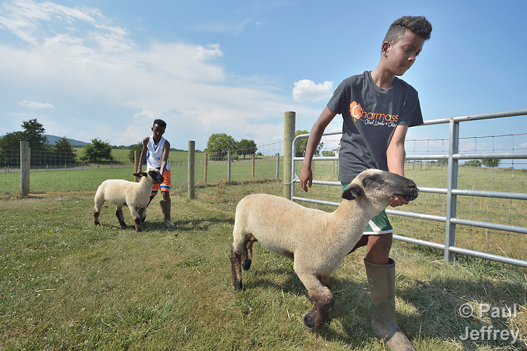 Robel Haile, a 13-year old resettled refugee from Ethiopia, exercises his sheep on a farm in Linville, Virginia, on July 17, 2017. Haile and other refugee youth, resettled in the area by Church World Service, are preparing to show sheep and goats in a county fair.<br /> <br /> Photo by Paul Jeffrey for Church World Service.