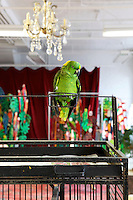 parrot on his birdcage