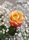 Gisela, FLOWERS, BLUMEN, FLORES, photos+++++,DTGK2385,#f#, EVERYDAY