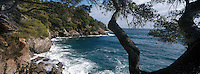 Europe/Provence-Alpes-Côte d'Azur/83/Var/Rayol-Canadel-sur-Mer: Jardin du domaine Rayol appartenant au Conservatoire du Littoral - Mer et cirque à la pointe du Figuier