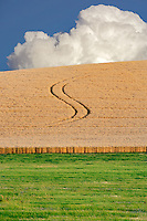 Tractor lines in wheat field. The Palouse. Washington