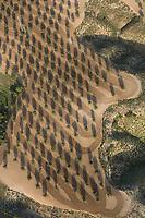 olive grove Aerial views, farming, Algodor, Spain