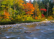 The beautiful Autumn / Fall Colors along the Swift River. Located near the kancamagus Highway (route 112) in the White Mountain National Forest of New Hampshire, USA