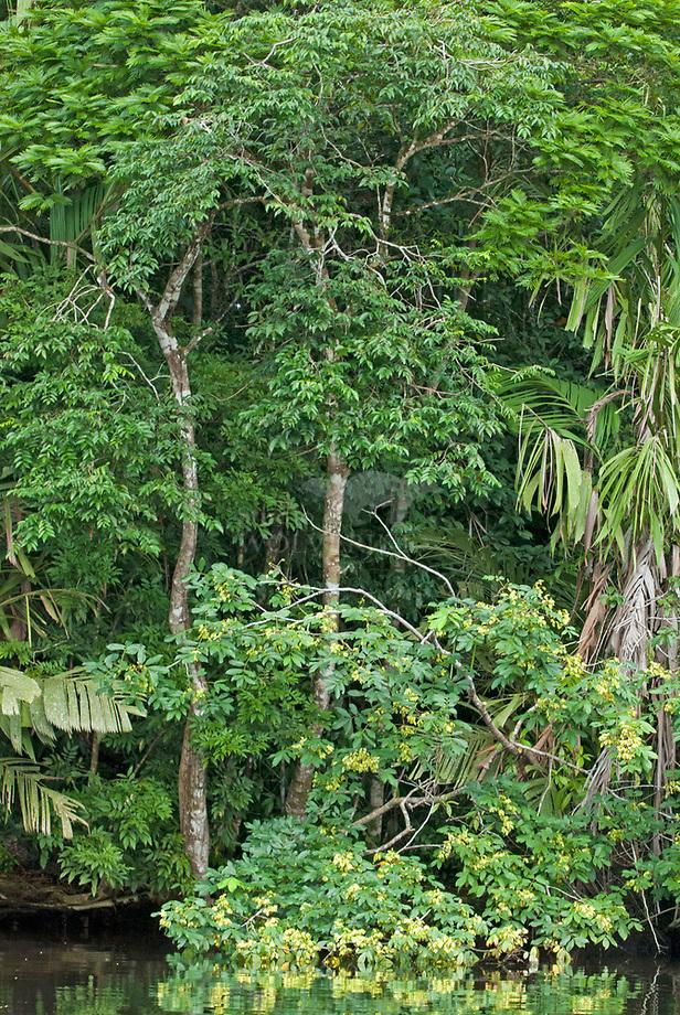 Tropisch regenwoud, Tortuguero - Costa RicaTropisch regenwoud, Tortuguero - Costa Rica