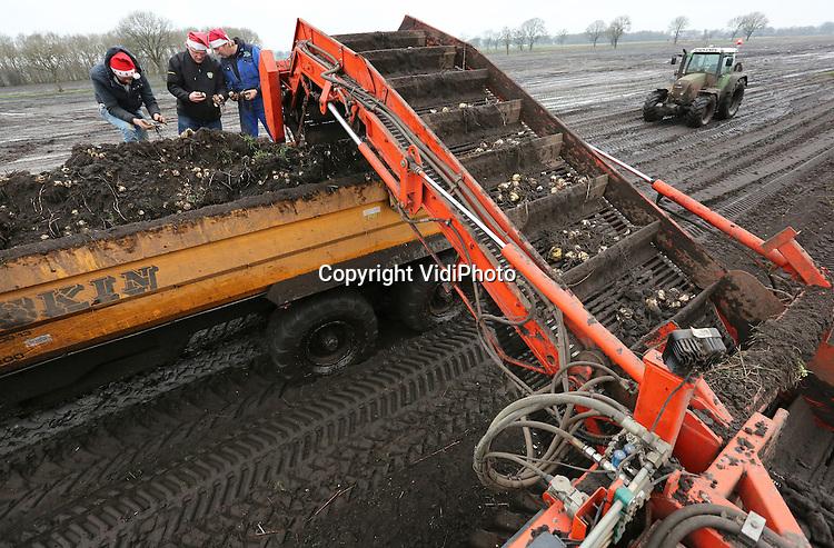 Foto: VidiPhoto<br /> <br /> VLEDDER - Een met rupsbanden uitgeruste oogstmachine rooit dinsdag de laatste leliebollen van het seizoen bij leliebedrijf De Middenweg Vledder BV in Drenthe. Het rooien van leliebollen (met een exportwaarde van 250 miljoen euro per jaar) is dit najaar ernstig bemoeilijkt door de overvloedige regenval. Lelietelers moesten daardoor met aan de drassige omstandigheden aangepaste machines het land op. Teler Hans van der Heijden verkeert dinsdag in opperbest kerststemming, omdat de laatste bollen van zijn 50 hectare leliepercelen (26 soorten, 25 miljoen stuks) worden geoogst. Collegabedrijven in onder meer de Noordoostpolder en Noord-Limburg redden het niet om voor de Kerst -zoals gebruikelijk- de laatste bollen binnen te halen. Zij moeten wachten op een droge periode in het nieuwe jaar. De lelieteelt biedt werk aan ongeveer 4500 mensen, waarvan meer dan duizend in de provincie Drenthe. Van de Nederlandse leliebollen worden behalve in Nederland, ook in bijvoorbeeld China, Japan en Mexico snijbloemen geproduceerd. In de laatste 30 jaar is de lelieteelt gegroeid naar een productie-oppervlakte van zo'n 4000 hectare en is daarmee financieel gelijkwaardig aan de tulpenteelt.