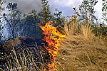 Incêndio em vegetação no Pantanal, Poconé, Mato Grosso. 1988. Foto de Juca Martins.