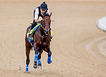 LOUISVILLE, KENTUCKY - MAY 01: Game Winner, trained by Bob Baffert, exercises in preparation for the Kentucky Derby at Churchill Downs in Louisville, Kentucky on May 1, 2019. Scott Serio/Eclipse Sportswire/CSM