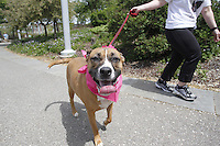 2013 Pittsburgh Marathon Pet Walk