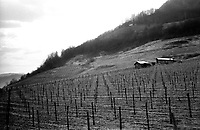 BOSNIA-HERZEGOVINA, Belgrade-Sarajevo Road, 03/2003..Lanscape pictures taken from the bus between Belgrad and Sarajevo. .Vineyard between Milici and Zaklopaca. .BOSNIE-HERZEGONVINE, Route Belgrade-Sarajevo, 03/2003..Photo prise depuis le bus qui relie Belgrade à Sarajevo. Vignes entre Milici et Zaklopaca..© Bruno Cogez / Est&Ost Photography
