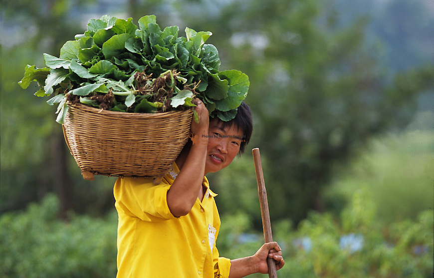 Portrait of farmer carrying cabbage harvest