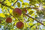 Pine View Orchard in Berwick, Maine, USA