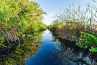 The canal leading from Santo Tomás is in the heart of the Zapata Swamp and is an excellent place to find the endangered endemic Zapata Wren, Zapata Sparrow and Zapata Rail. Cuba.