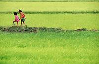 Kids walking in freshly planted rice paddies.