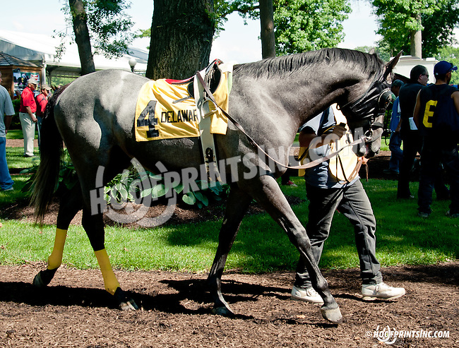 Perilous Indian before The Oh Say Stakes at Delaware Park on 6/29/13