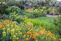 Indianola, WA: Summer perennial garden featuring orange poppies, euphorbia, roses, and lupine