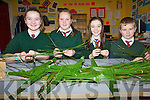 Pupils at Firies National School have been busy making the traditional St Brigid's crosses to mark the annual Saints day and to help raise funds. .L-R Sixth class pupils Clodagh Clifford, Fiona Fell, Kiera Fell and Diarmuid O'Mahony