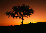 An African sunset with tree silhouetted against the evening sky.