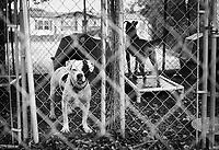Homeless dogs await adoption at an animal shelter near San Antonio, Texas.