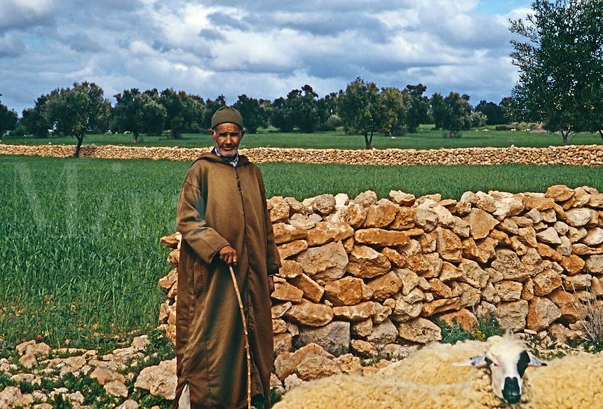 Shepherd tending his sheep, Essouria, Morocco