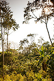 BELIZE, Punta Gorda, Toledo District, the jungle canopy in the Maya village of San Jose