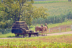 Bailed hay on wagon with two mule team in August.