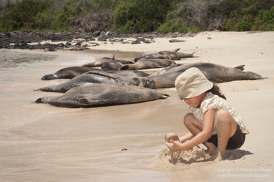 Santa Fe Island, Galapagos, Ecuador; a young girl plays in the sand on a beach filled with resting Galapagos Sea Lions (Zalophus wollebaeki) at the edge of a lagoon, on the eastern side of Santa Fe Island, model released , Copyright © Matthew Meier, matthewmeierphoto.com All Rights Reserved