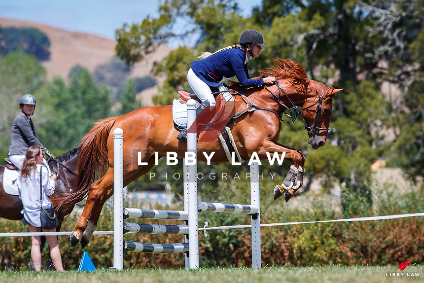 Class 32 Intro Horse 80cm. 2020 NZL-Fieldline Horse Floats Brookby Showjumping Summer GP Show. Papatoetoe Pony Club. Auckland. Sunday 9 February. Copyright Photo: Libby Law Photography