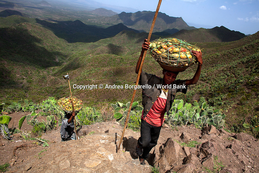 Ethiopia, Tigray region, Rayazebo District. Boys carrying cactus fruits from a plantation recreated by the World Bank funded Sustainable Land Management Program to prevent land erosion.