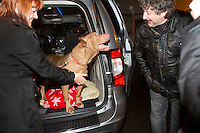 Leroy, a six-and-a half–year-old pit bull-type dog, is reunited with Heather Enajibi (left), President of the Animal Aid and Rescue Foundation (AARF) and friends in a parking lot at City Hall in Forks, WA on December 20, 2013. The dog had been in possession of Steve Markwell at the Olympic Animal Sanctuary (OAS) for over three years and was released back to Enajibi after a court hearing in Port Angeles, WA.  He is the first, and thus far only dog, known to be released by Markwell since June 2013. <br /> <br /> Owner Steve Markwell Markwell has been under fire for neglecting the dogs after volunteers filed a complaint in 2012. The City of Forks police department investigated and found horrific conditions but said legally they were unable to do anything about it. Markwell claims he has 125 dogs inside and believes he is their last hope.  Many of the dogs were turned over to him by rescues and shelters who deemed them dangerous. Mounting evidence of animal cruelty has prompted many of them to ask for their dogs back.  Markwell refuses and only lets a few trusted volunteers enter the premises.