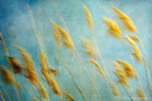 Abstract of blowing reeds with texture