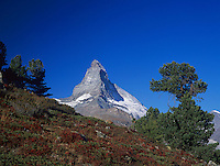Matterhorn and fall colors, Zermatt, Swiss Alps, Switzerland, Europe