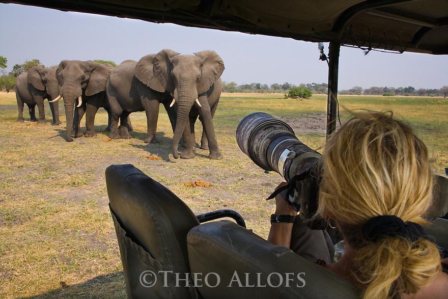 Tourist photographing elephants from game drive vehicle, Moremi Game Reserve, Okavango Delta, Botswana --- Model Released