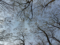 FOREST_LOCATION_90224