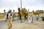 Israel 1982. Rafah border crossing. Bedouin with camels.<br /> <br /> The Hebrew stop sign reads: Military police checkpoint ahead.