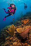 25 February 2014: SCUBA Diver Sally Herschorn explores Rock Pile Reef on Klein Bonaire, an uninhabited islet off the coast of the Dutch Island of Bonaire. Bonaire, known for its pioneering role in the preservation of the marine environment and is a public body of the Netherlands, and formerly part of the Netherland Antilles. Located in the southern Caribbean, off the coast of Venezuela, Bonaire is renowned for its excellent scuba diving, snorkeling and windsurfing. Dive Number 0454. Mandatory Credit: Ed Wolfstein Photo *** RAW (NEF) Image File Available ***