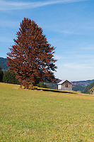 Small wooden barn on grass hillside with colorful autumn trees at Oberjoch Pass on the German - Austrian Border