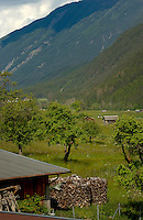 Wood pile and farm buildings, Imst district, Tyrol/Tirol, Austria, Alps.