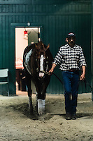 HALLANDALE, FL - JANUARY 27: California Chrome walks through the barn after morning workouts, at Gulfstream Park Race Course on January 27, 2017 in Hallandale Beach, Florida. (Photo by Douglas DeFelice/Eclipse Sportswire/Getty Images)