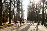 ITALY, Venice. The tree lined Viale Giuseppe Garibaldi in the Castello district of Venice. Castello is the largest of the six sestieri of Venice.