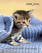 Marek, ANIMALS, REALISTISCHE TIERE, ANIMALES REALISTICOS, cats, photos+++++,PLMP2331,#a#