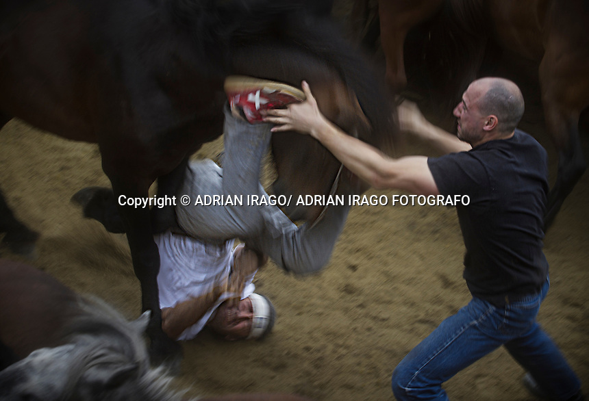 A &quot;aloitador&quot; falls horse during the Rapa das Bestas in Sabucedo (Galicia) on July 3, 2011. When summertime comes in Galicia (Northwest of Spain), the use of &ldquo;curro&rdquo; begins. A ritual which preserves the free and wild spirit of this region which has remained traditionally tied to nature.<br /> This tradition consists of marking and shaving horses' horsehair from those who live in freedom. It happens in the &ldquo;curros&rdquo;, closed stalls where locals gather the cattle. The most expert breeders, called &ldquo;aloitadores&rdquo;, hold a huge struggle with the horses until these are tamed. They mark them with hot irons to identify the owner and the horsehair is cut for their well-being in the wild. Afterwards they are taken back into the forests where they live.<br /> Sabucedo's Rapa Das Bestas, 40 km from the capital Santiago de Compostela, is the most famous &ldquo;curro&rdquo; in Galicia. Every year more than 500 horses are gathered from Montouto Hills and it features the struggle with bare hands between man and animal. Around Rapa Das Bestas a feast takes place, with tasting of octopus and wine, therefore it turns into an authentic popular festival. &copy; Adri&aacute;n Irago