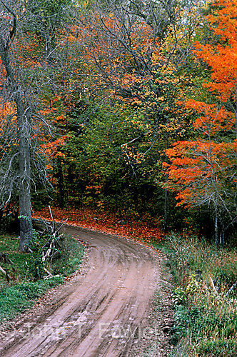 Gravel road in Lanark Co., Ontario