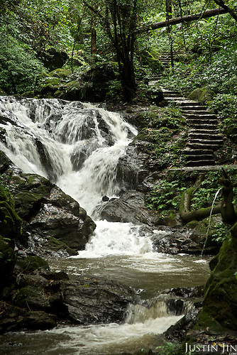 At the rainforest park outside Ruili town, Yunnan province, southwestern China.